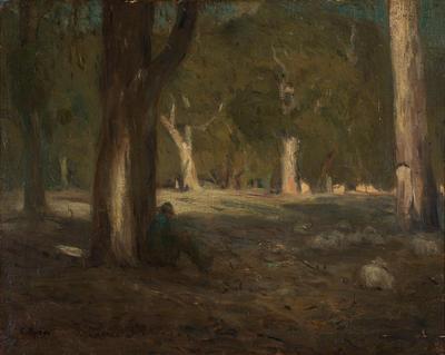 Moonlight in the Australian Forest