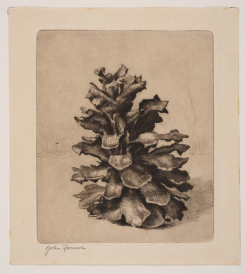 Pine Cone; work on paper/print
